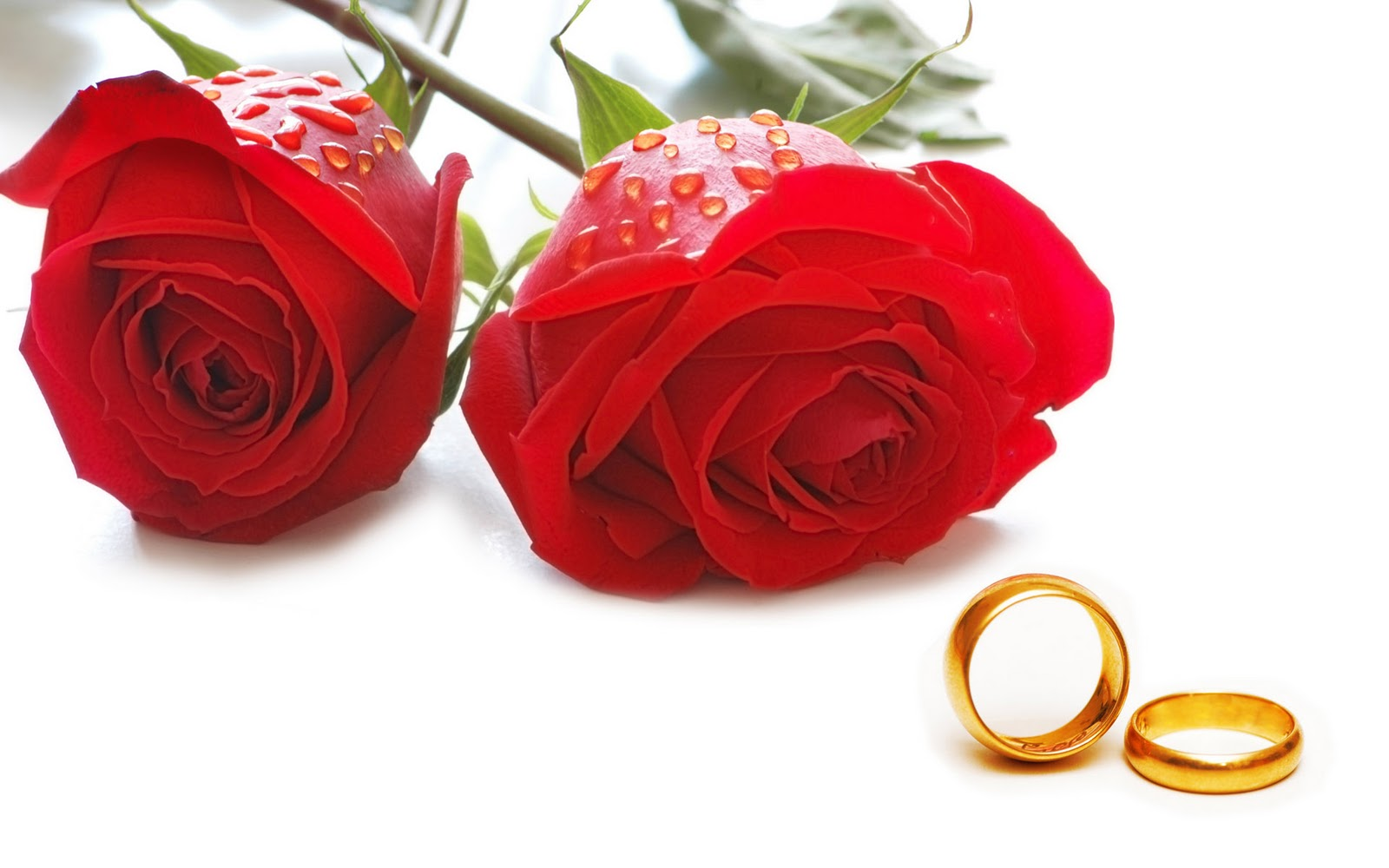 Rose Day Special Messages