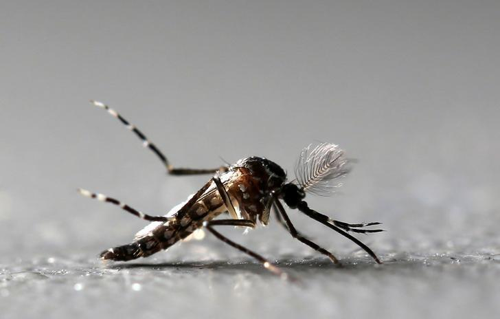 Scientists to Test Whether Zika Can Kill Brain Cancer Cells