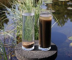 Single-Use Bioreactors Consumption Market