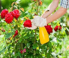 Garden Pesticides Market