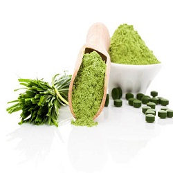 Wheat Grass Powder Market