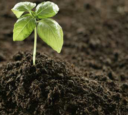 Organic Fertilizer Market