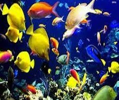 Residential Ornamental Fish Market
